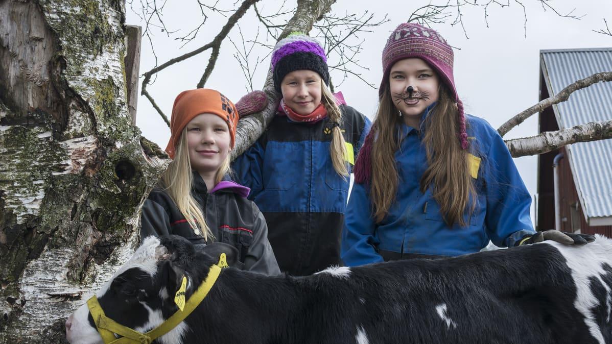 Tytöt seisovat vasikan kanssa
