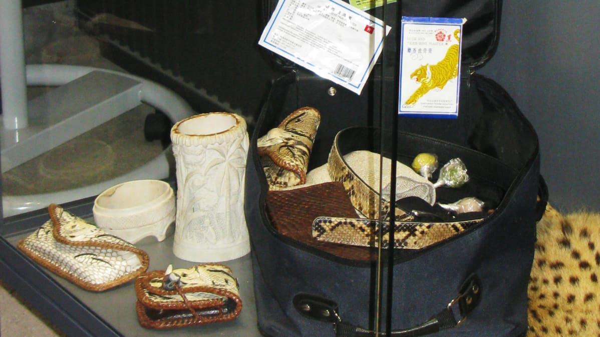 Korkeasaaren hämärätalossa on Tullin takavarikoimia uhanalaisia eläin- ja kasvilajeja esittelevä näyttely.