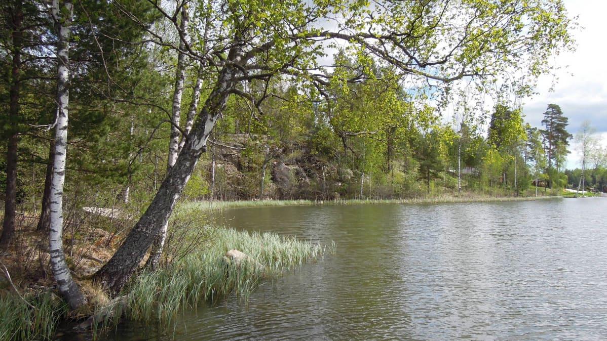 Raaseporin Källträskin rannoilla on 30 kesäasuntoa.