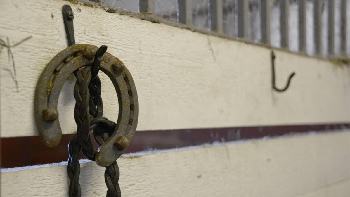 Hevosenkenkä roikkuu koukusta seinällä