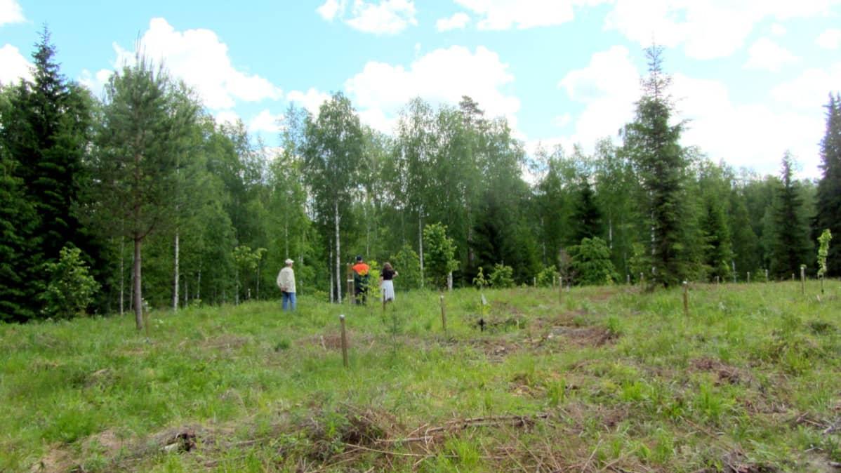 Puupuisto taimella
