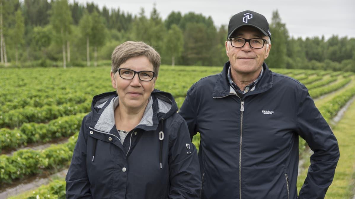 Ritva ja Kalevi Rusanen mansikkatilalla Sotkamossa.