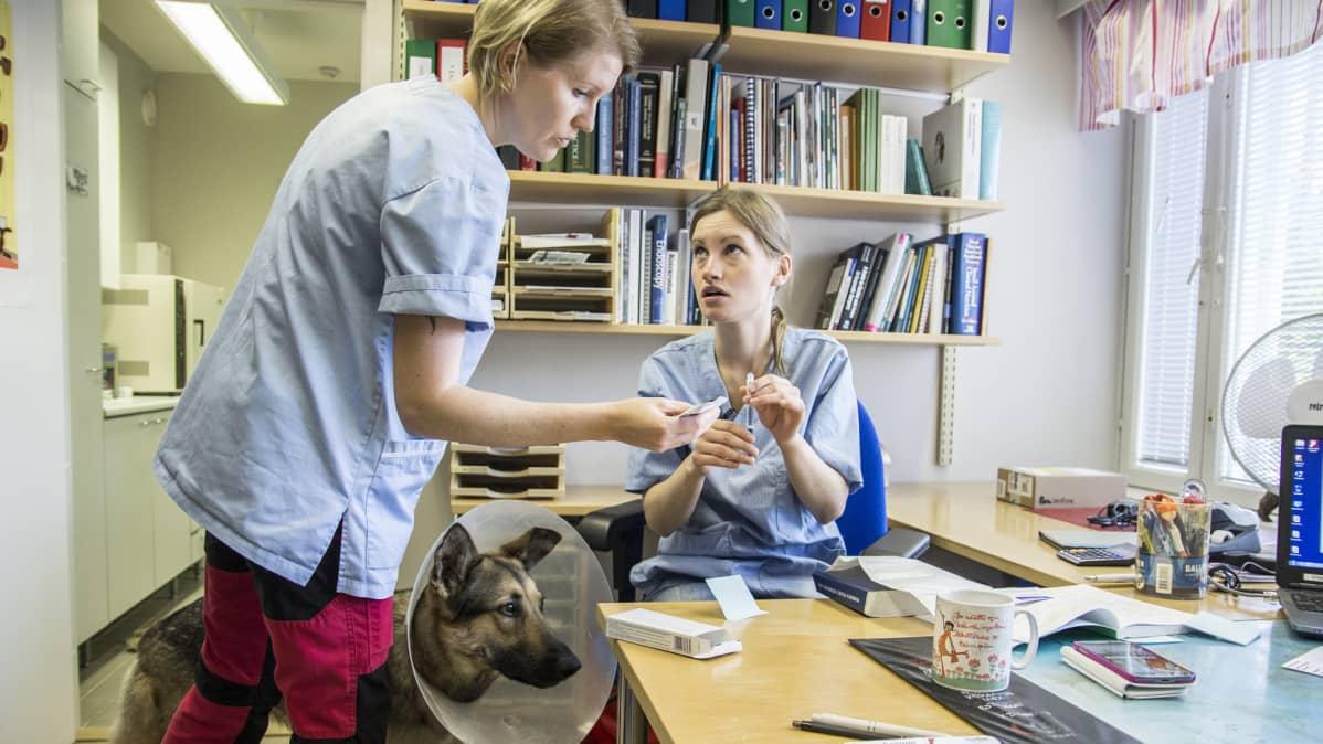 Pieneläinhoitaja ja eläinlääkäri istuvat taukohuoneessa.
