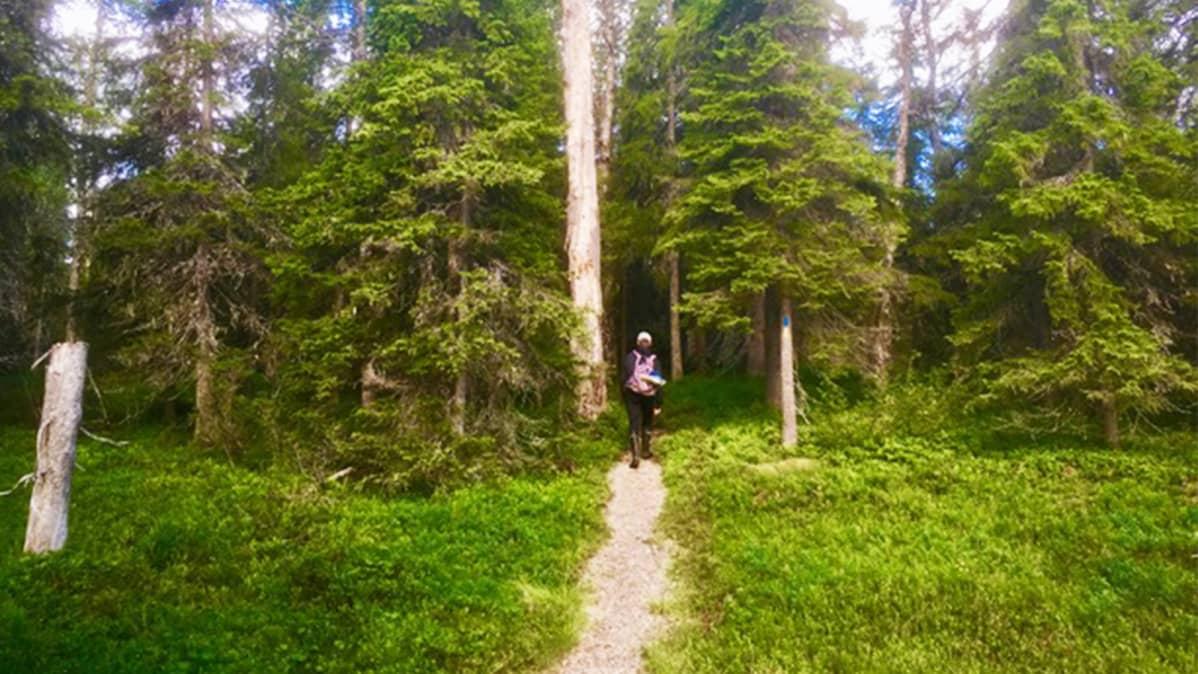 Matka Rytivaaraan kulkee vanhan metsän halki.