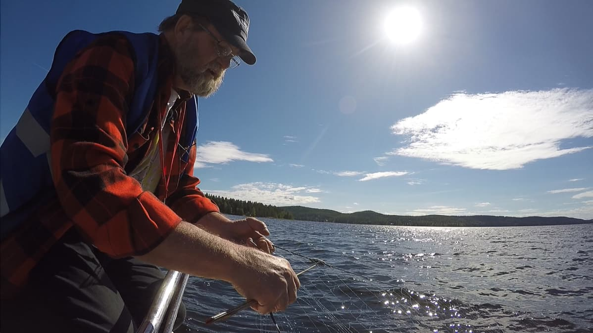 Kalastuksenvalvoja Risto Mankosella on vuosi vuodelta vähemmän verkkoja tarkistettavana.