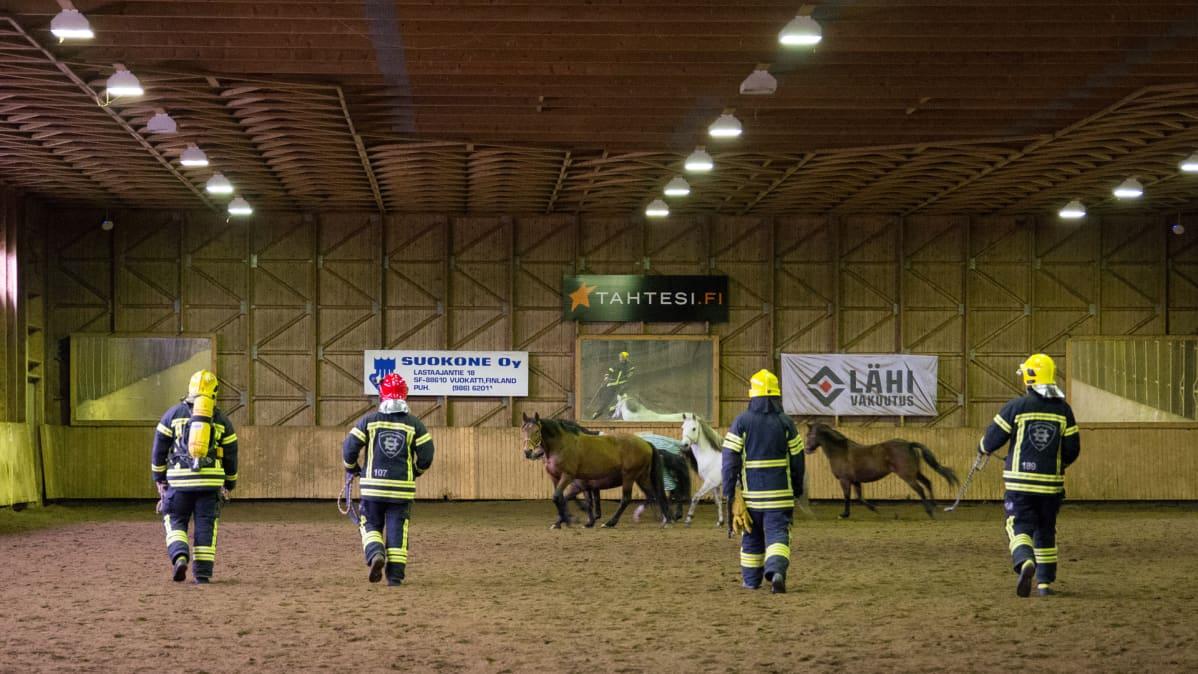 Kainuun pelastuslaitos harjoittelee hevosten käsittelyä Vuokatissa.