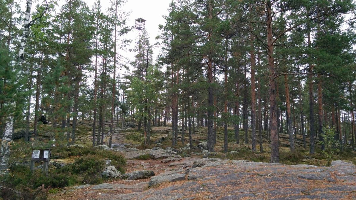 Alajärven Pyhävuorelle pääsee helposti ja siellä on eri pituisia reittejä.