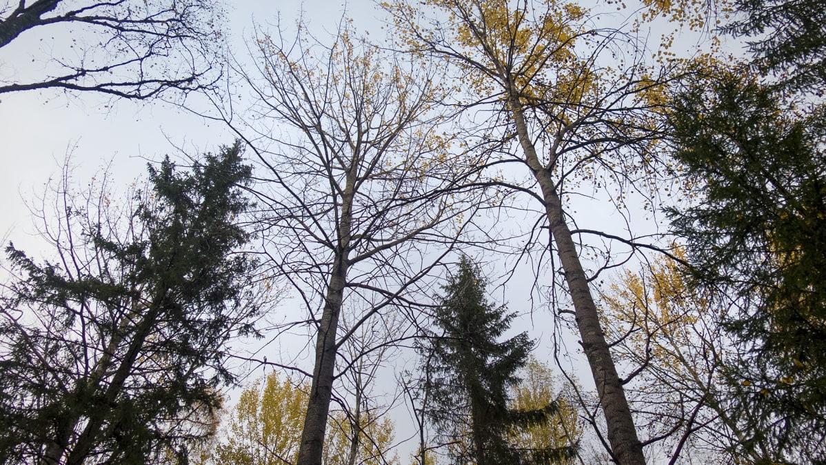 Syksyistä metsää