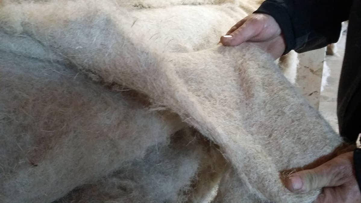 Kuituhampusta tehtyä huopaa löytyy tehtaan uumenista rullakaupalla.