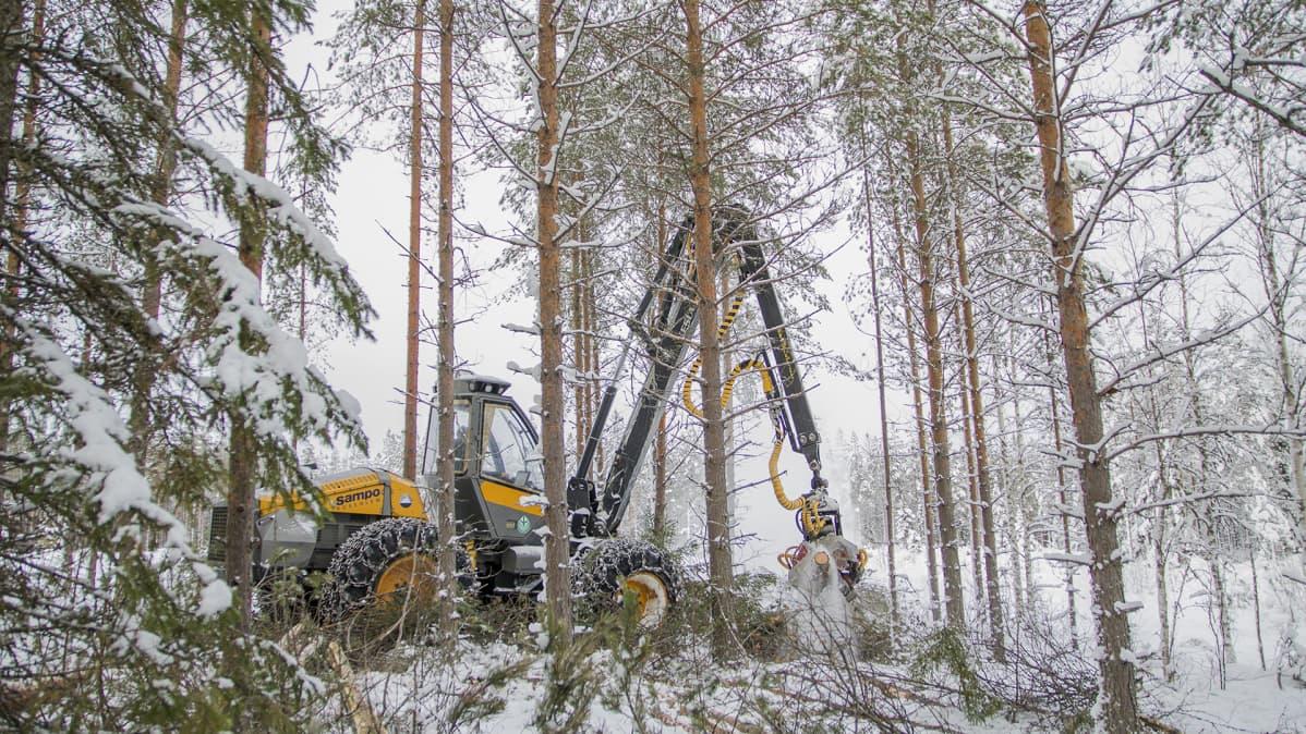 Harvesteri lumisessa metsässä.