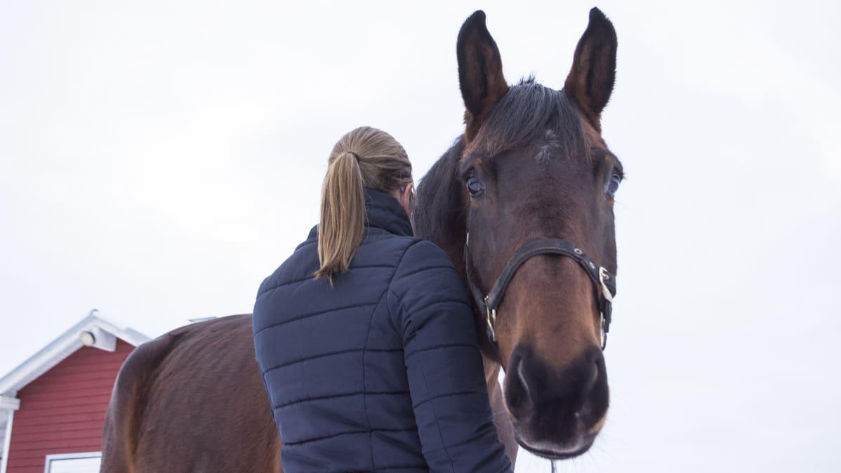 Hevonen ja nainen selin kuvassa.