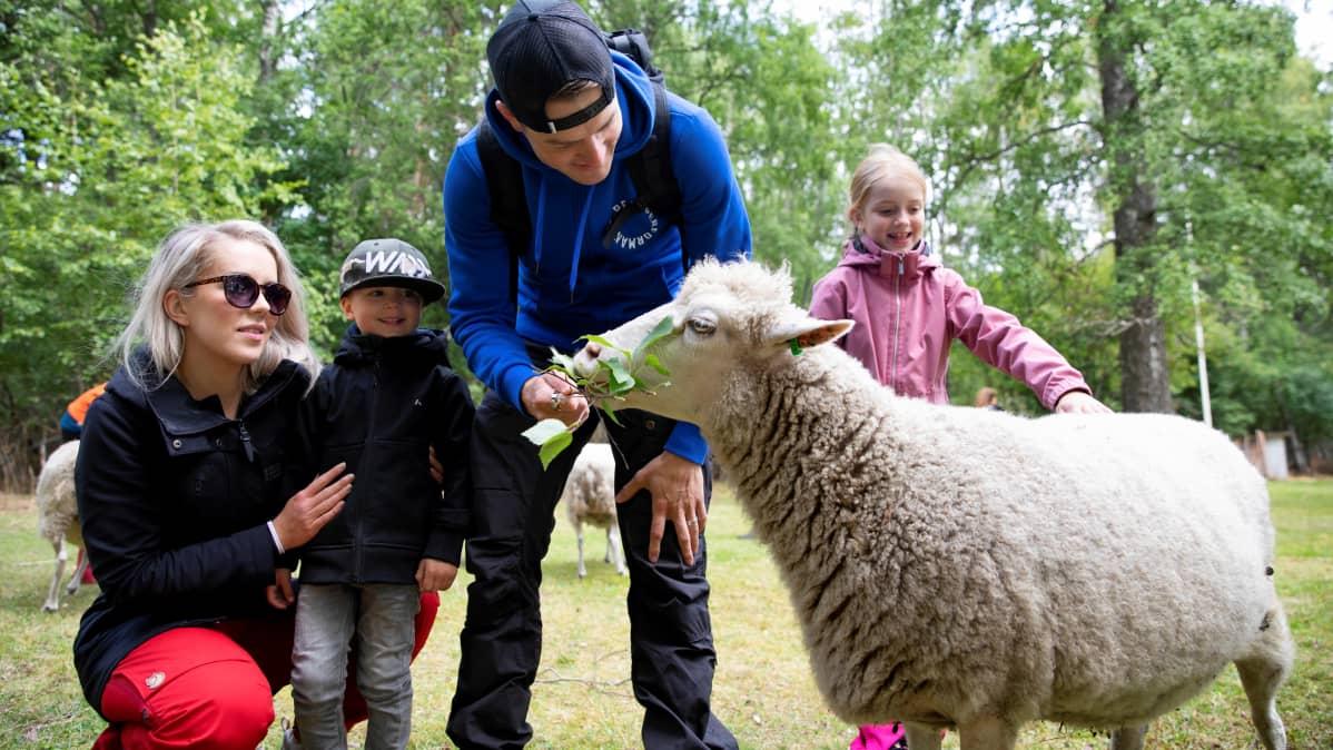 Ihmisiä syöttää lammasta.