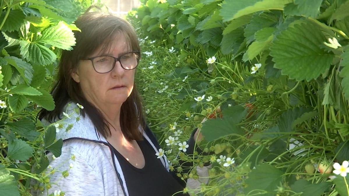 Kvinna i växthus.