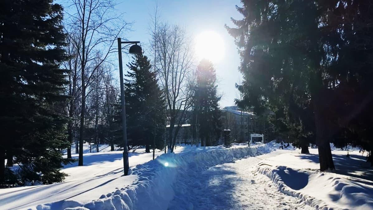 Oulun Ainolanpuistossa aurinkoinen talvisää
