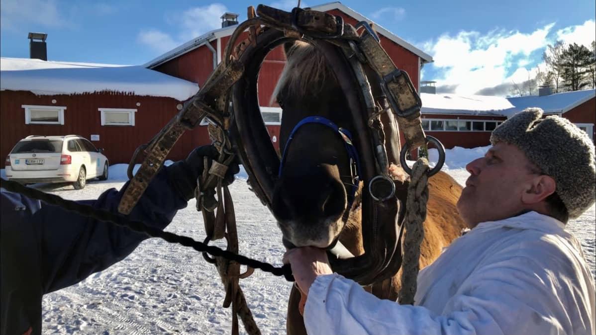 Mies pujottaa hevosen pään yli vanhoja tykkivaljaita