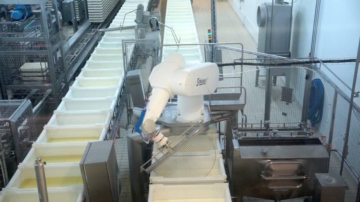 Juustolan tuotantolinjastoa, robotti sekoittaa juustomassaa.