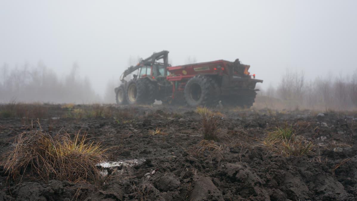 Sukevan Pihlajasuolla on aloitettu tuhkalannoitus puiden kasvamisen edistämiseksi.