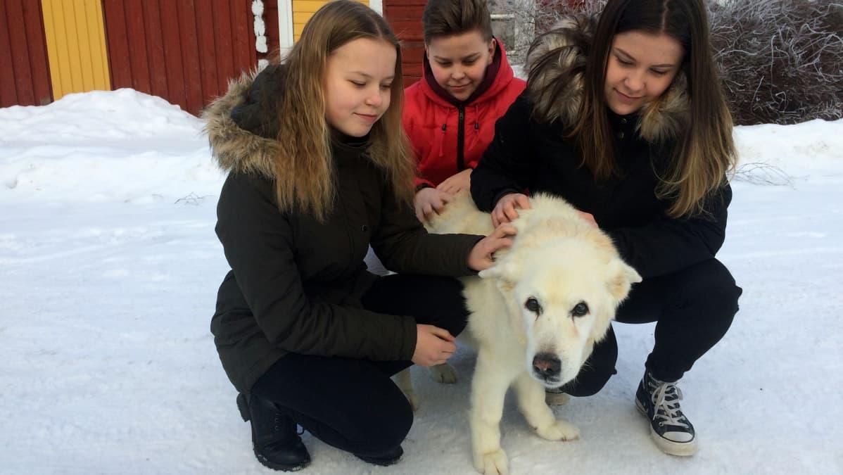 Kaksi tyttöä ja poika silittämässä vaaleaturkkista koiraa. Koira on 19-vuotias.