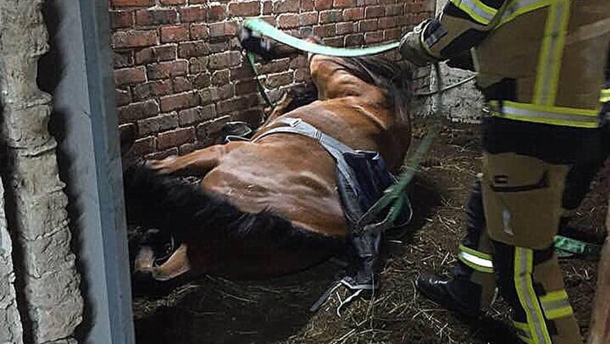 Pelastuslaitos auttaa hevosta