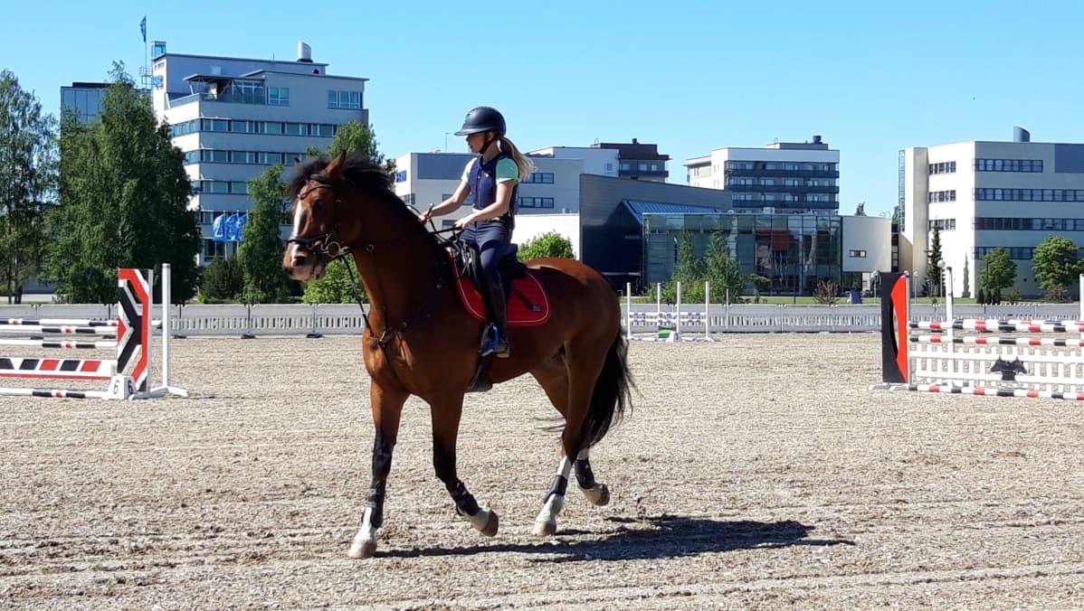 ratsukko Seinäjoen kentällä