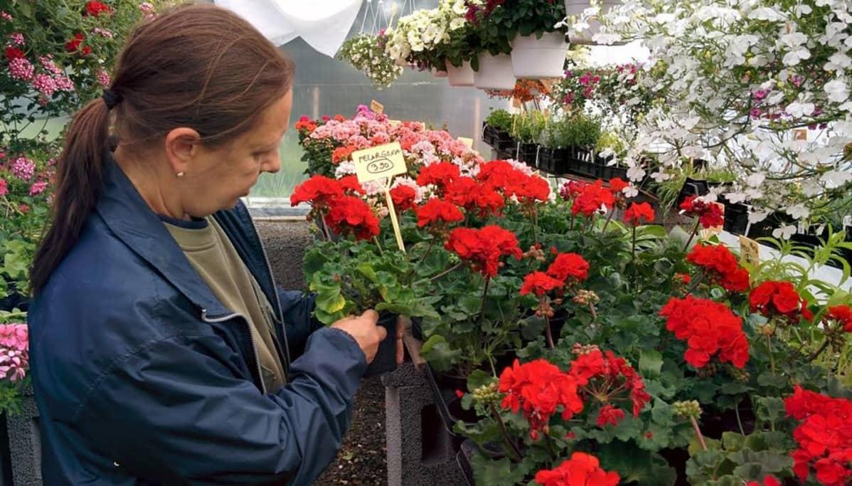 Kukkamyyjä Paula Vartio-Ojanen sanoo, että alkukesän tuulet ja sateet ovat olleet riski kesäkukille.