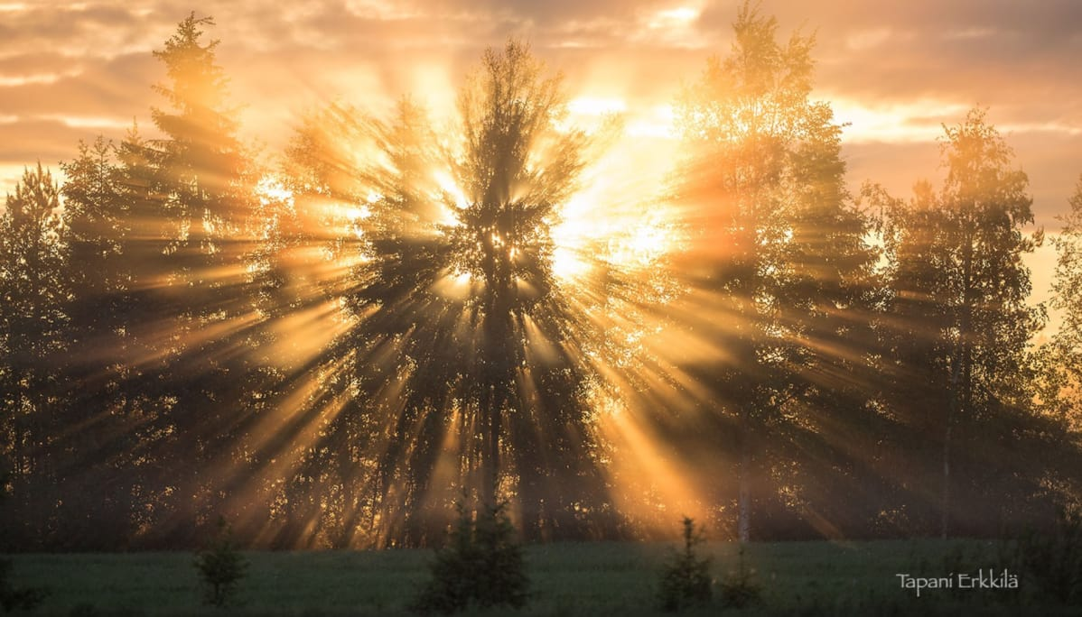 Auringonsäteet puiden takana