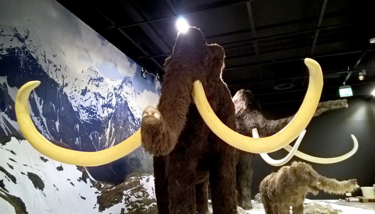 Mammutti näyttelyhallissa