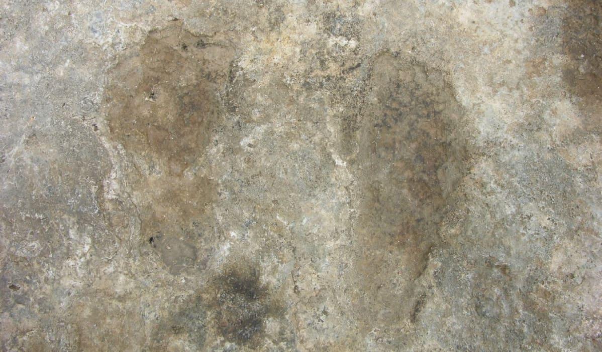 Kaksi kivettynyttä jalanjälkeä