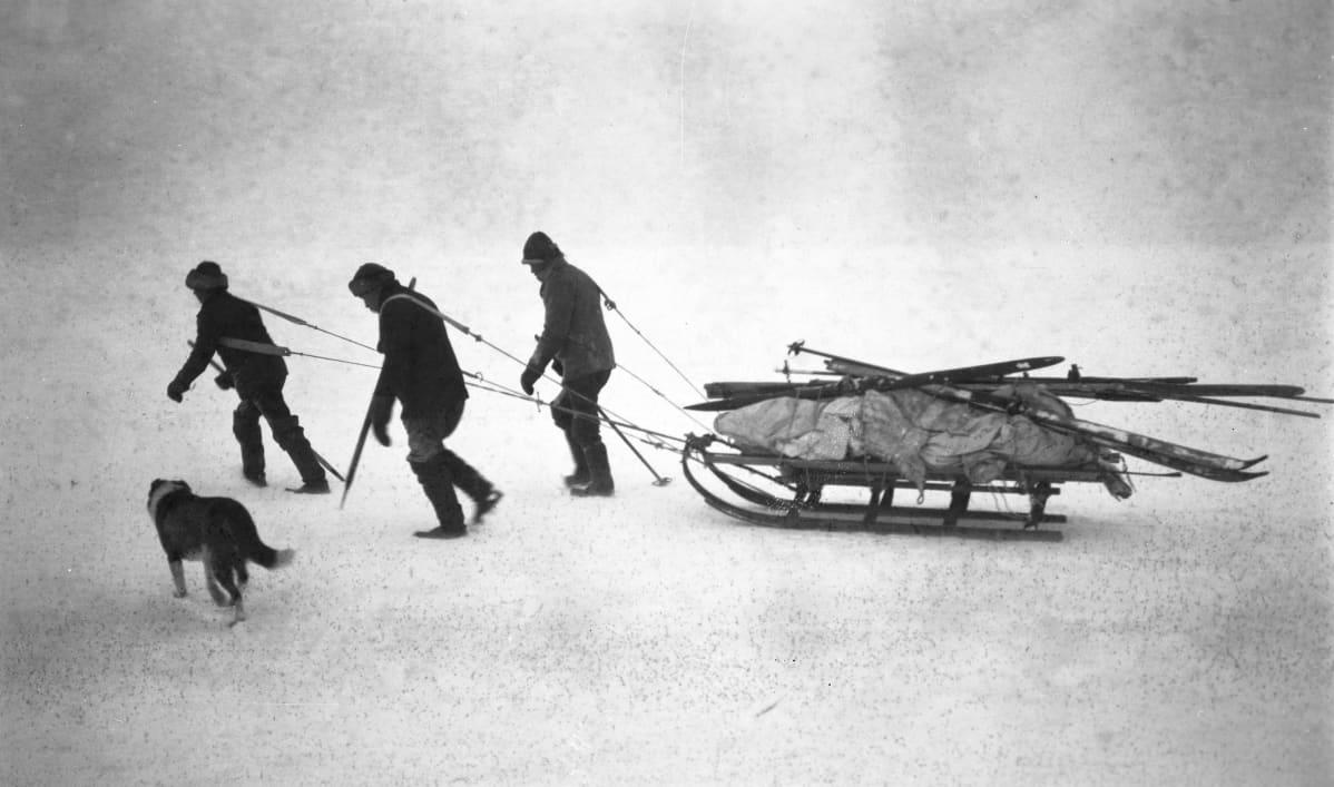 Hylkeenpyytäjät koirineen etenevät jäällä, kuva vuodelta 1924.