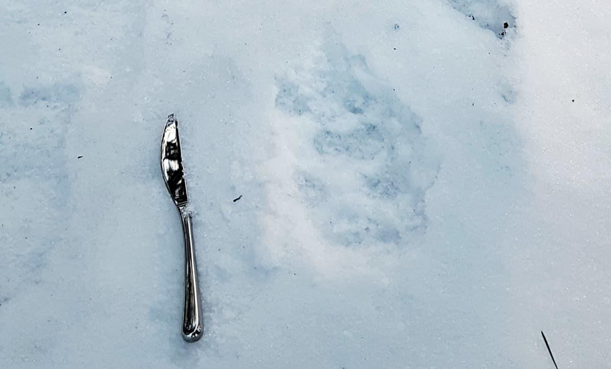 Suden jalanjälki lumessa.