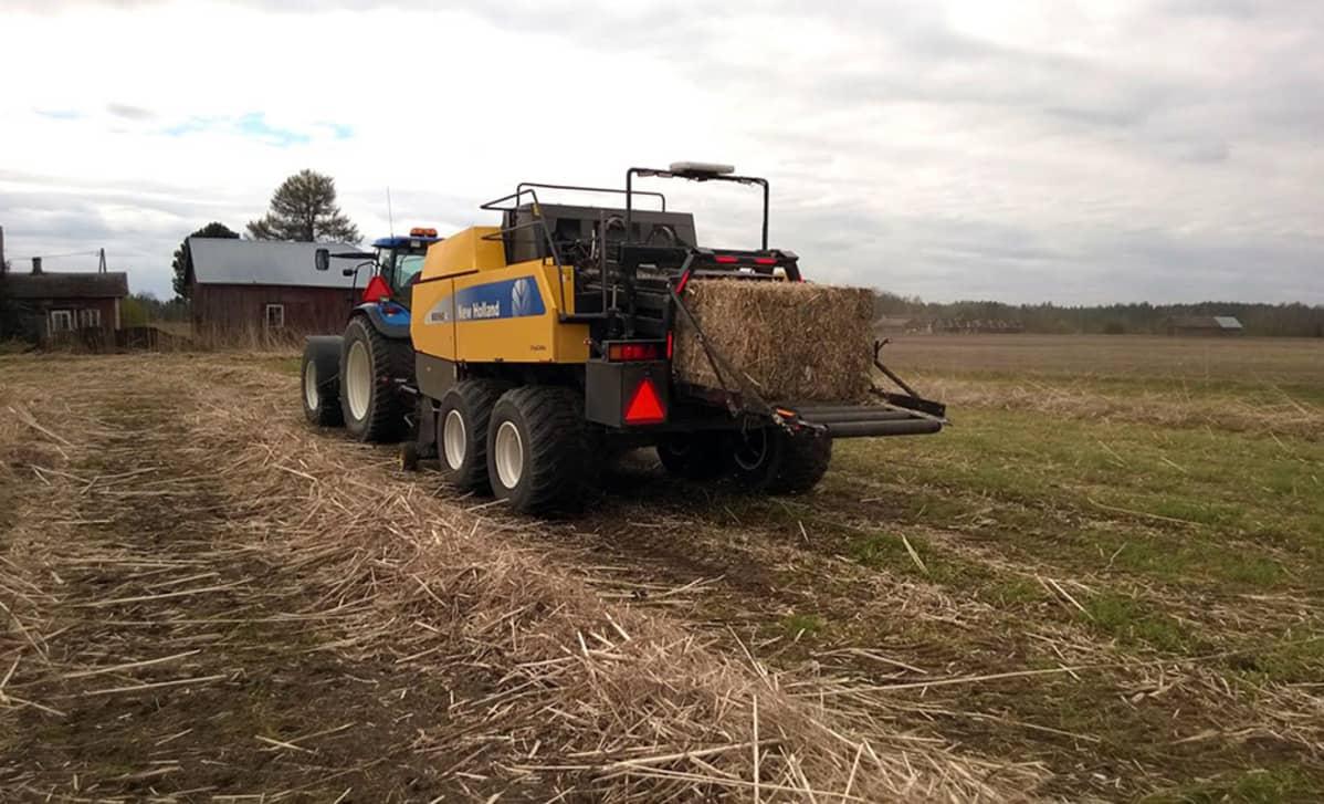 Kuituhampun sadonkorjuuta, traktori ja työkone pellolla