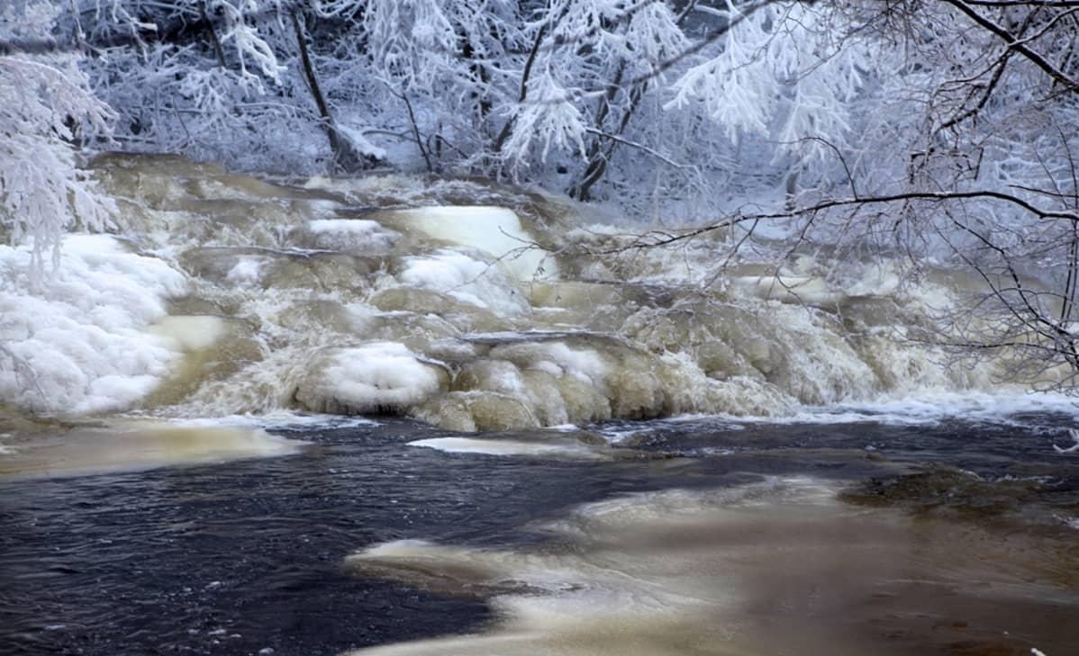 Korvenkoski jsuppojään peitossa 2014. Rutalahden korvenkoski on osa Leivonmäen kansallispuistoa. Talvisin jäät muovaavat kosken maisemaa taian omaiseksi