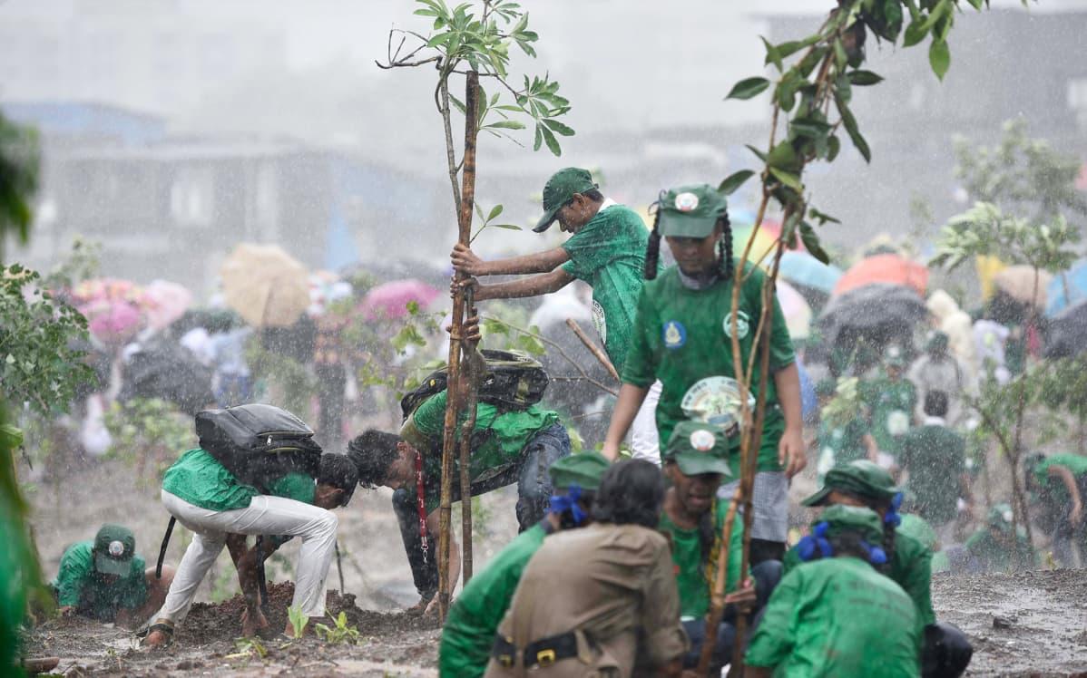 Koululaiset istuttavat puita.