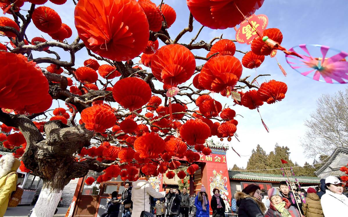 Punaiset paperilyhdyt puun oksilla juhlistavat temppelijuhlaa, jota vietettiin lauantaina kevään kunniaksi Ditan-puistossa Pekingissä.