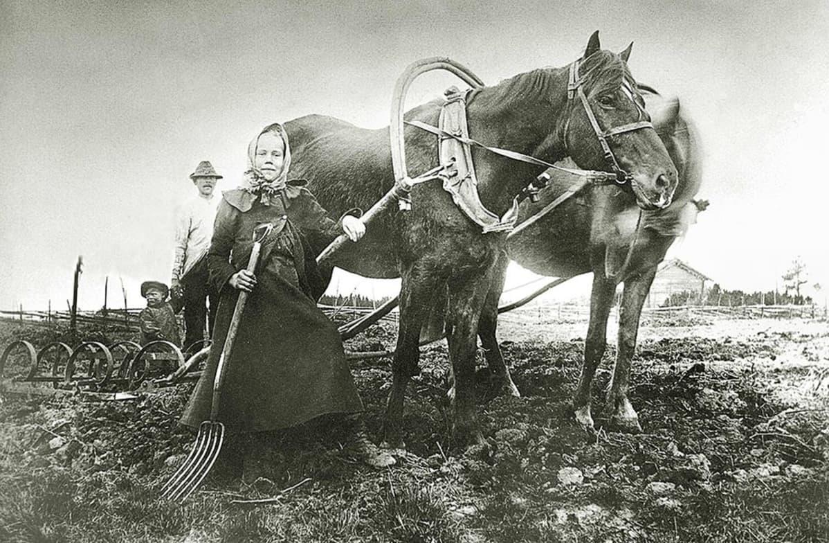 Hevonen peltotöissä.