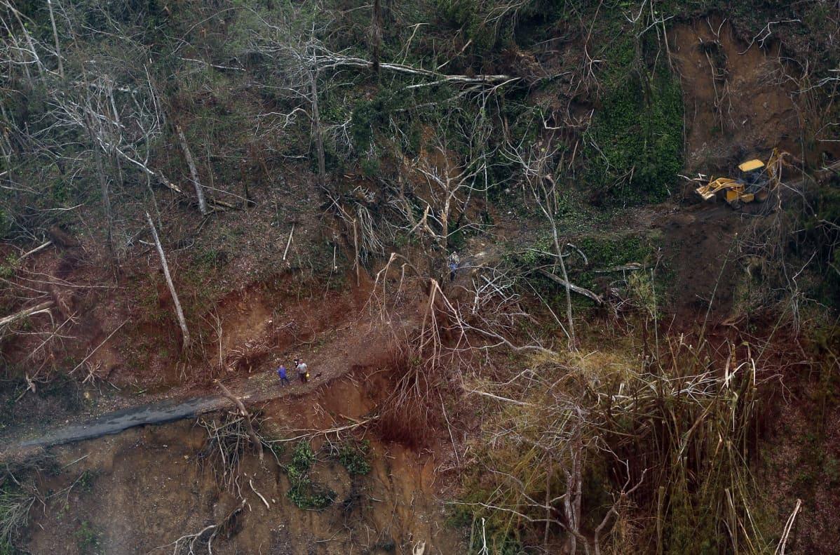 Hurrikaani Maria repi puita ja tuhosi teitä Puerto Ricon vuoristomaastossa.