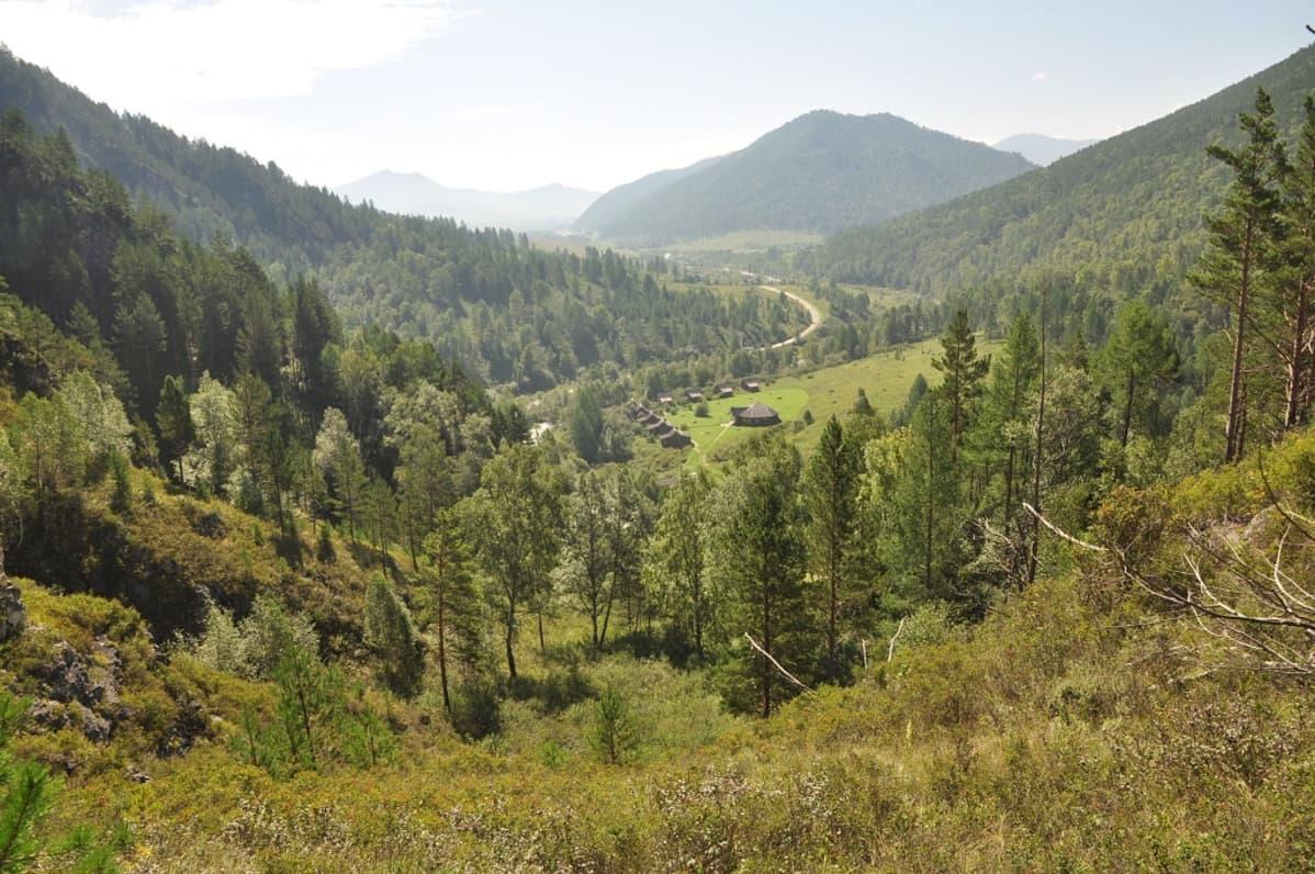 Puiden peittämiä vuorenrinteitä.