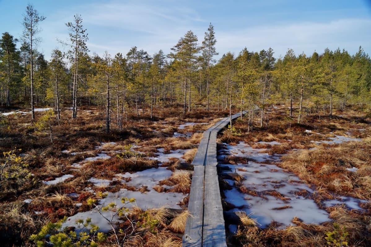 Torronsuon kansallispuisto 29.3.2016.