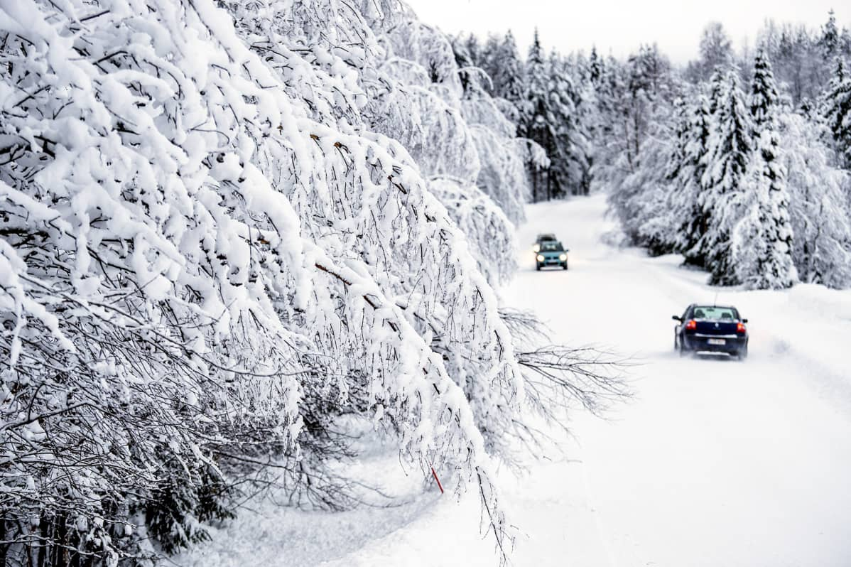 autoja lumisella metsätiellä