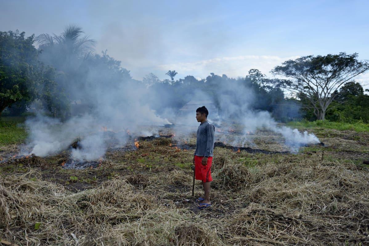 Kulotusta Sawrey Jaybun kylässä Itatuban alueella Brasiliassa.