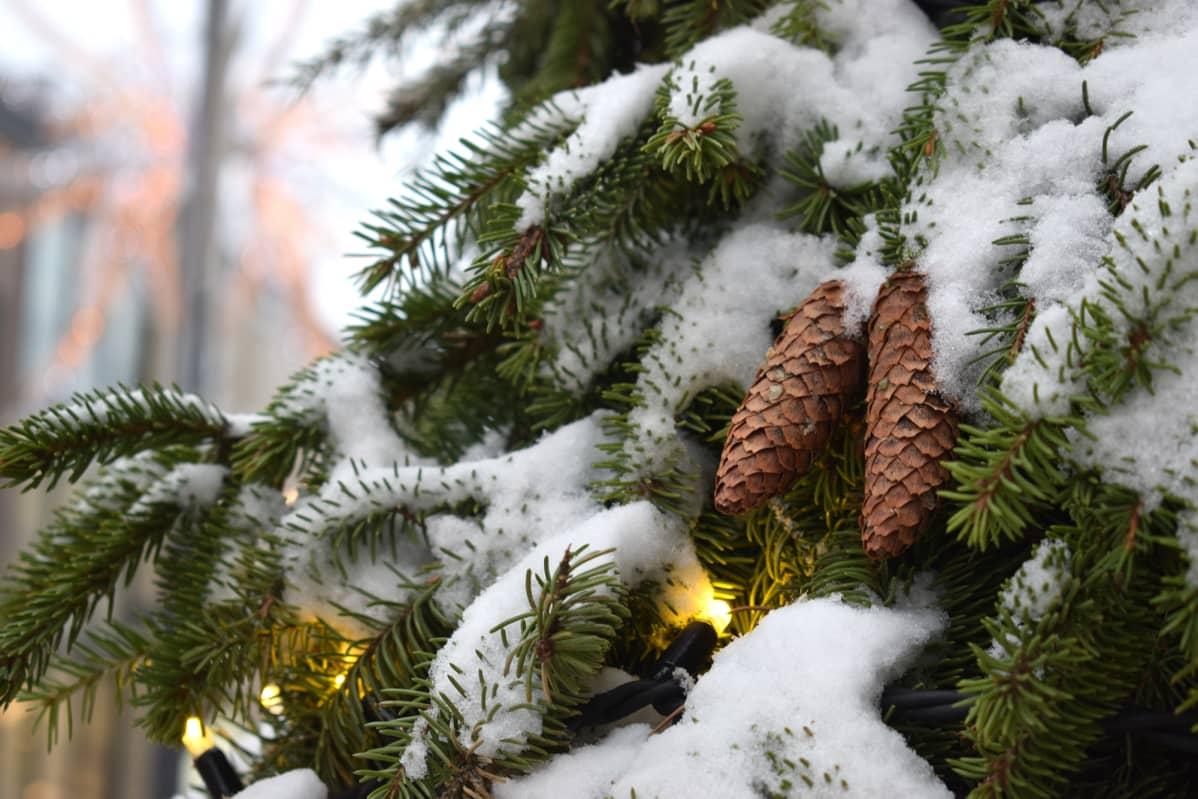 Jouluvaloja kuusessa