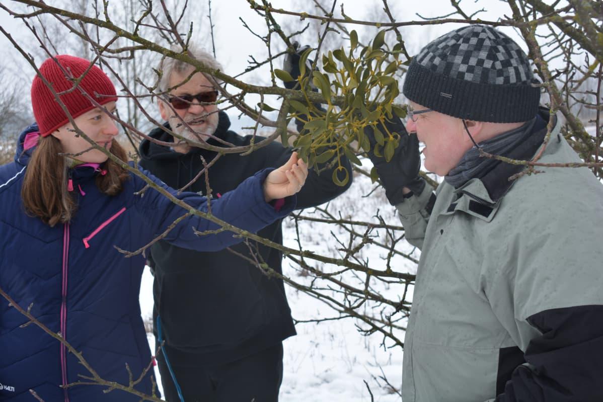 Biologit Kati Pihlaja, Jouni Issakainen ja puutarhaneuvos Arno Kasvi.