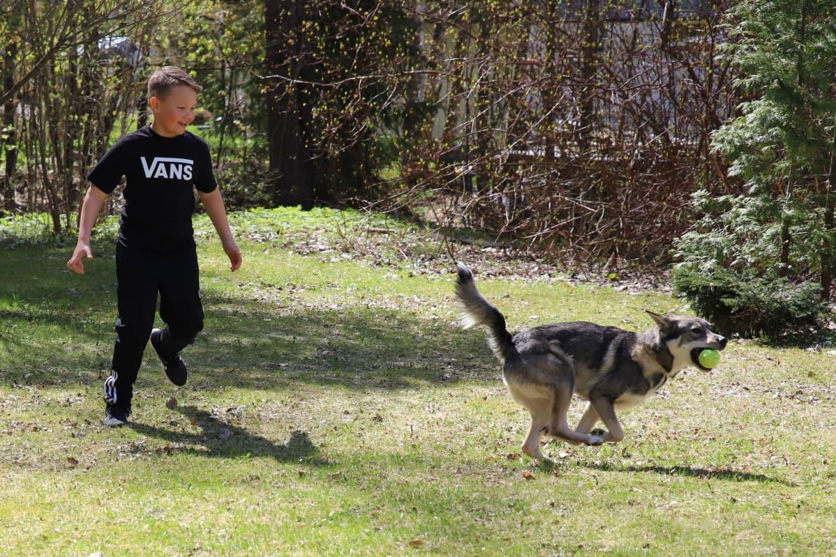 Milo Laine leikkii pallolla Tao-koiran kanssa.