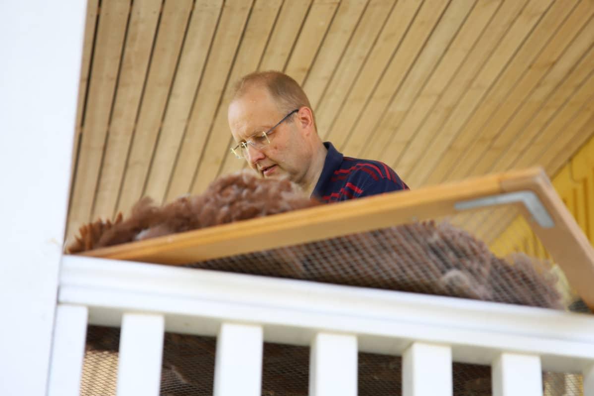 Petri Porkka erottelee roskia alpakan villasta.