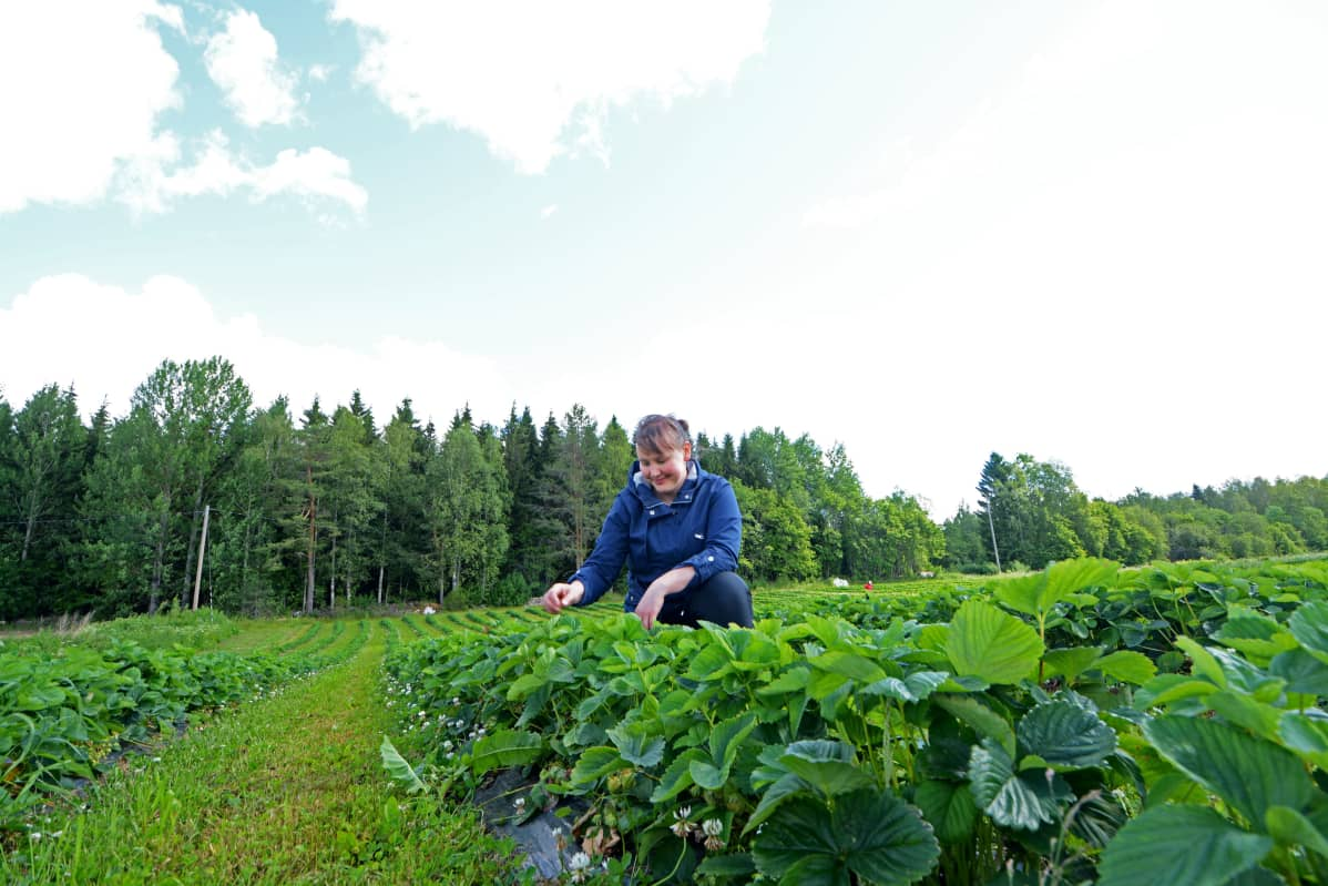 Noora Räsänen mansikkapellon keskellä.