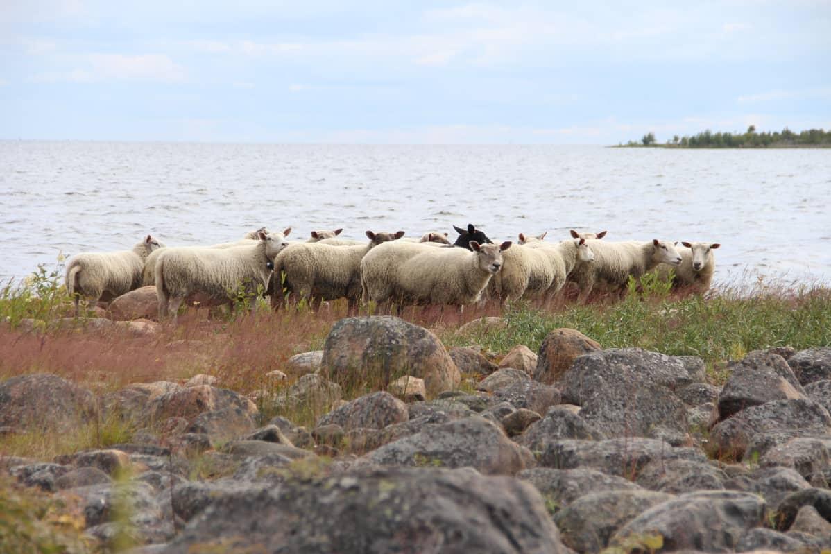 Lammaslauma rannalla Pensaskarissa.