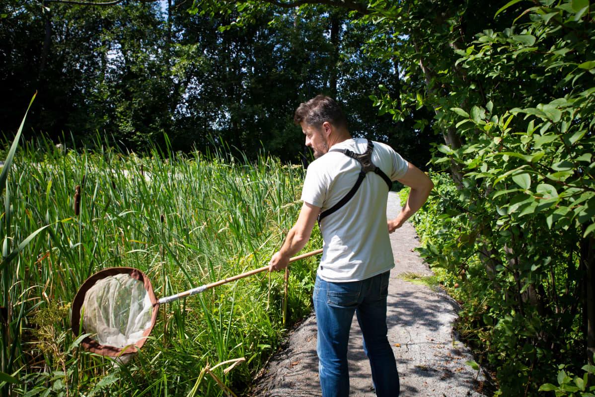 luontoharrastaja Petro Pynnönen hyönteishaavin kanssa lammen rannassa Lohjalla