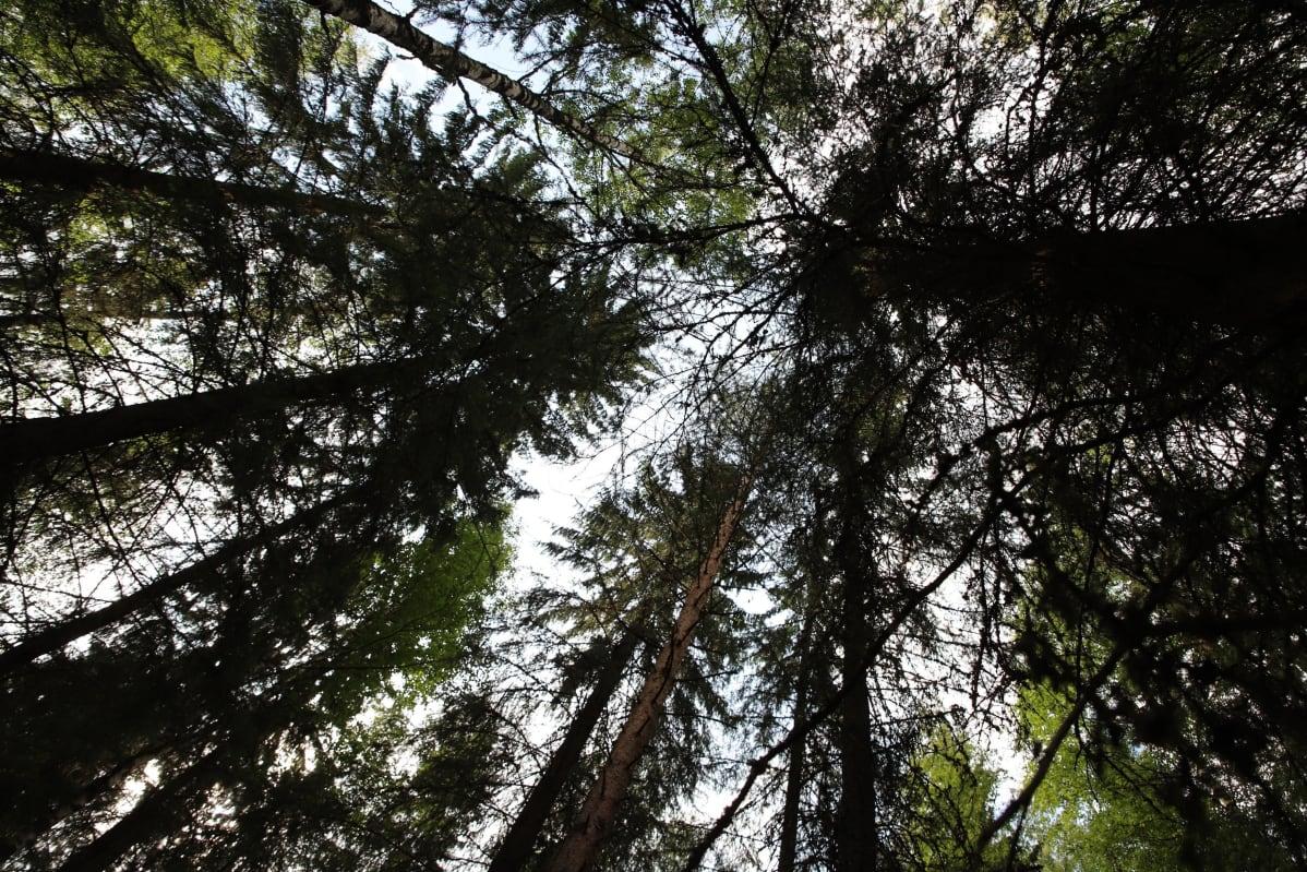 Renkolaista metsää