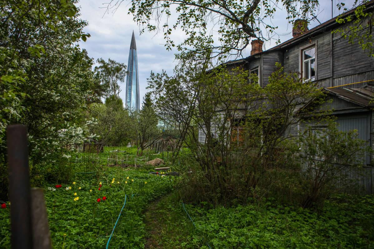 Etualalla vihreä piha ja ränsistyvä talo, taka-alalla Gazpromin torni.