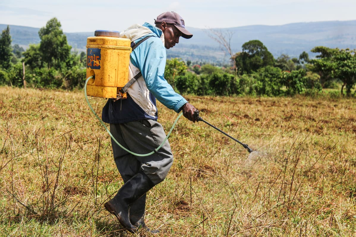 Kuvassa mies myrkyttää tuholaisia huhtikuussa Keniassa.